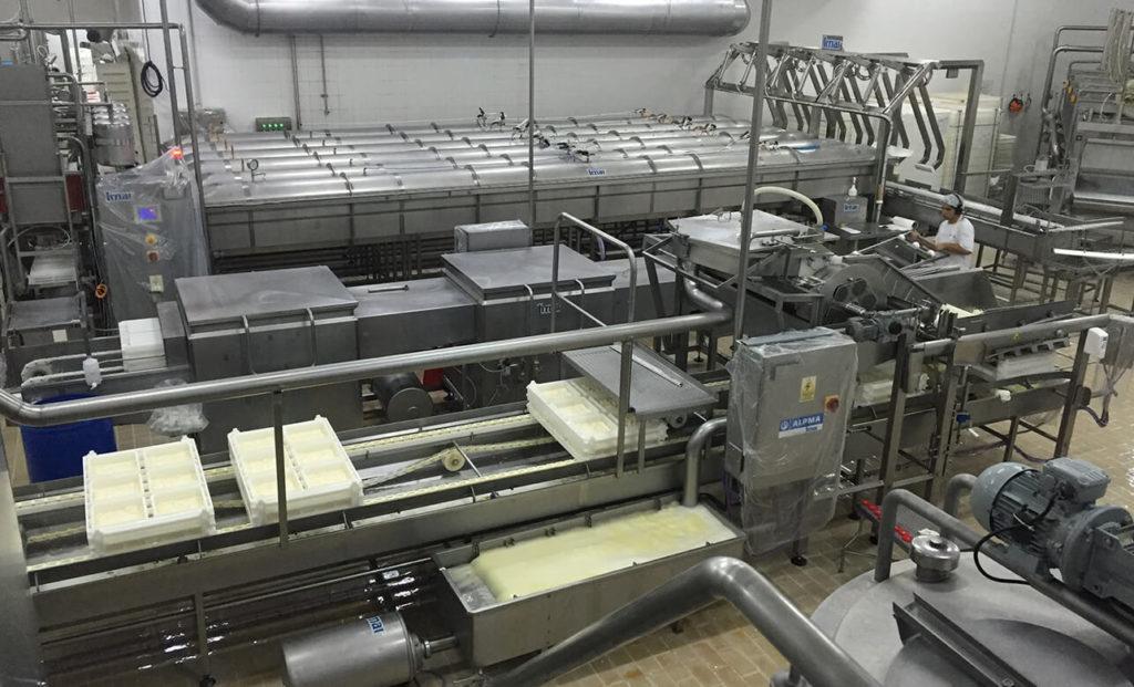 planta-queso-semiduro-duro-01